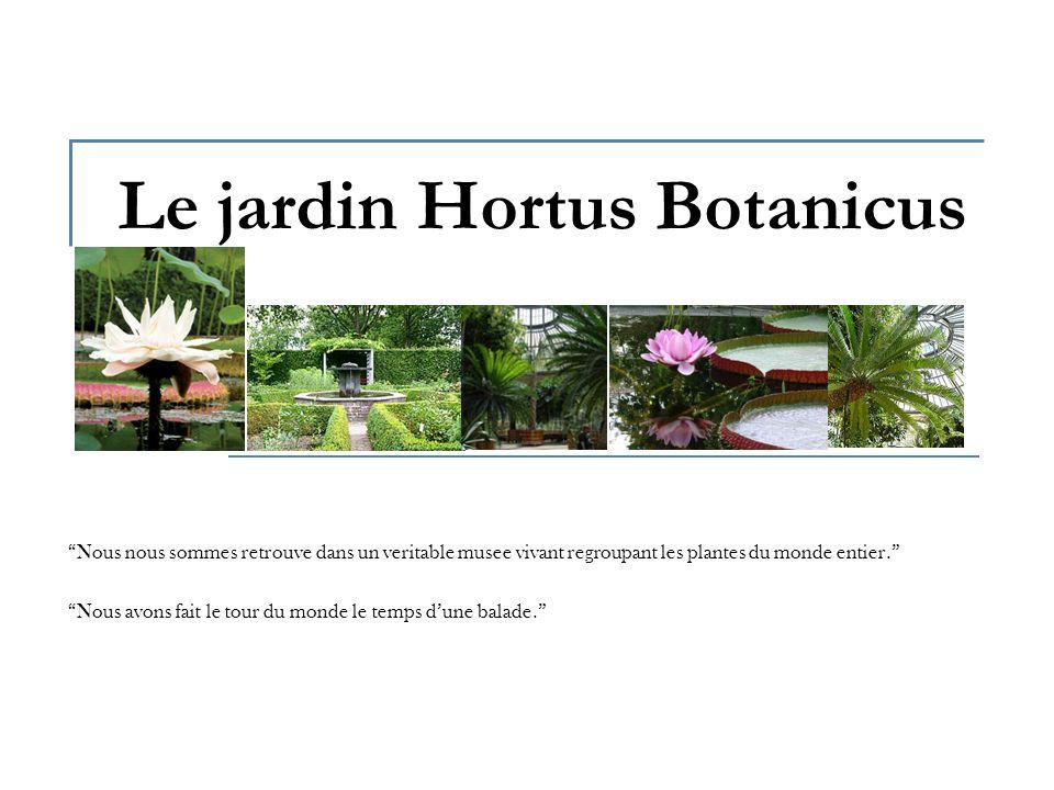 Le jardin Hortus Botanicus Nous nous sommes retrouve dans un veritable musee vivant regroupant les plantes du monde entier.