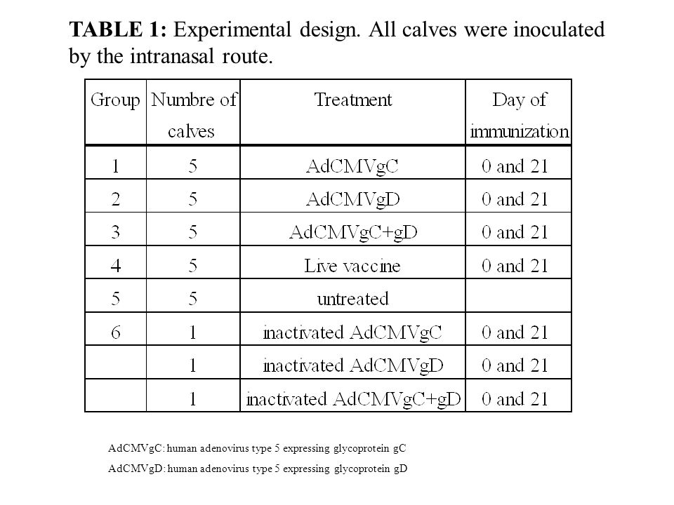 TABLE 1: Experimental design.All calves were inoculated by the intranasal route.