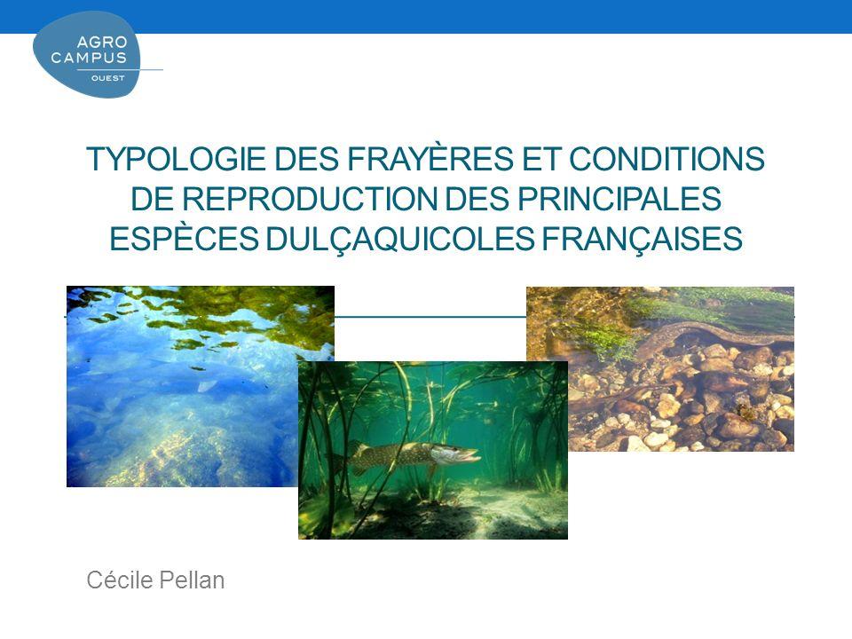 TYPOLOGIE DES FRAYÈRES ET CONDITIONS DE REPRODUCTION DES PRINCIPALES ESPÈCES DULÇAQUICOLES FRANÇAISES Cécile Pellan