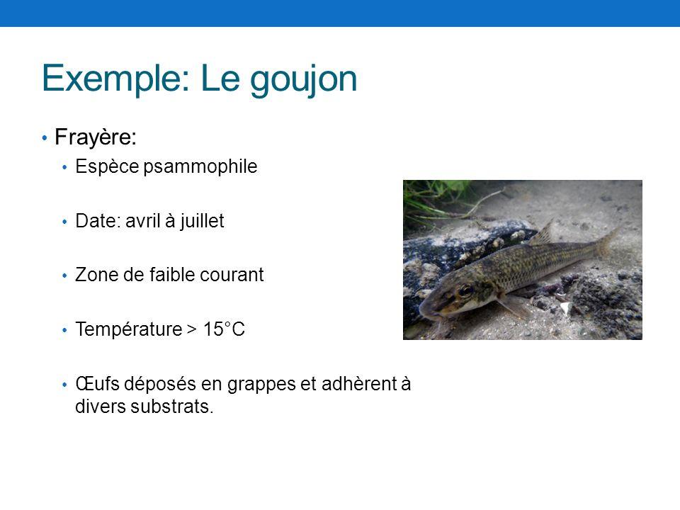 Exemple: Le goujon Frayère: Espèce psammophile Date: avril à juillet Zone de faible courant Température > 15°C Œufs déposés en grappes et adhèrent à d