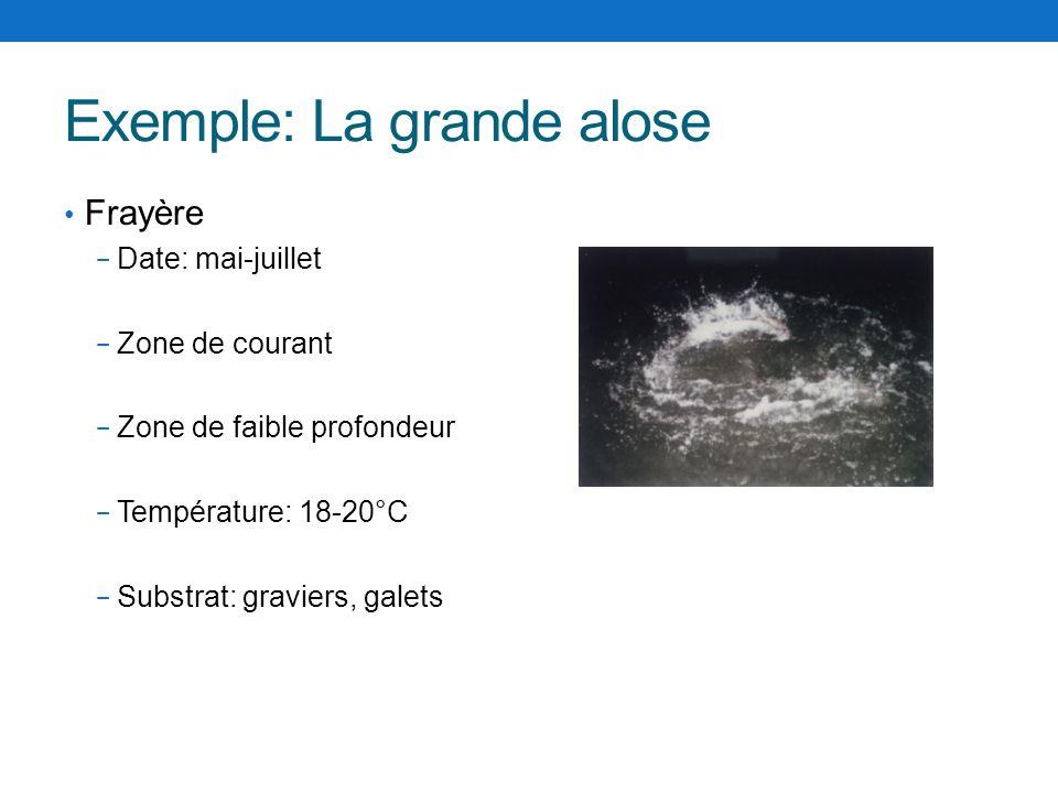 Exemple: La grande alose Frayère Date: mai-juillet Zone de courant Zone de faible profondeur Température: 18-20°C Substrat: graviers, galets