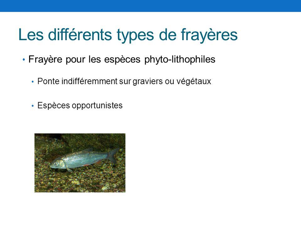 Les différents types de frayères Frayère pour les espèces phyto-lithophiles Ponte indifféremment sur graviers ou végétaux Espèces opportunistes