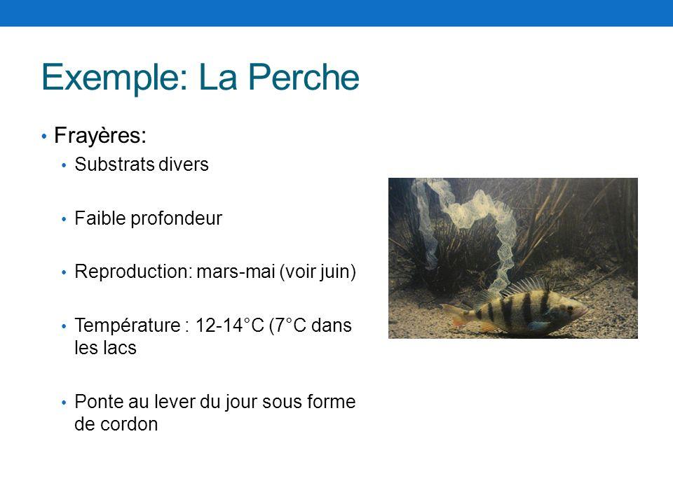 Exemple: La Perche Frayères: Substrats divers Faible profondeur Reproduction: mars-mai (voir juin) Température : 12-14°C (7°C dans les lacs Ponte au l