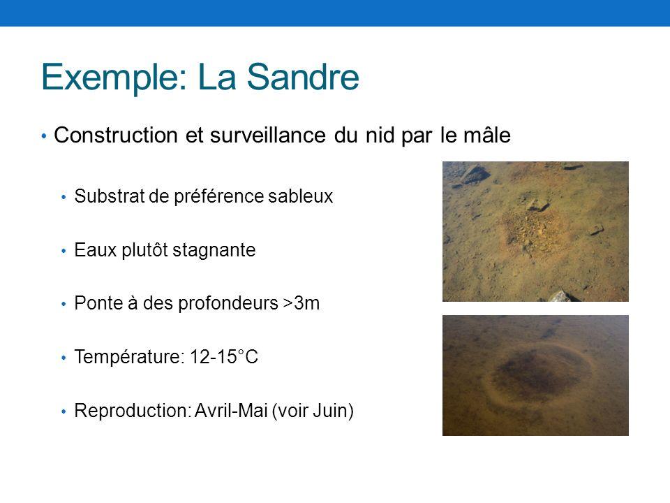 Exemple: La Sandre Construction et surveillance du nid par le mâle Substrat de préférence sableux Eaux plutôt stagnante Ponte à des profondeurs >3m Te