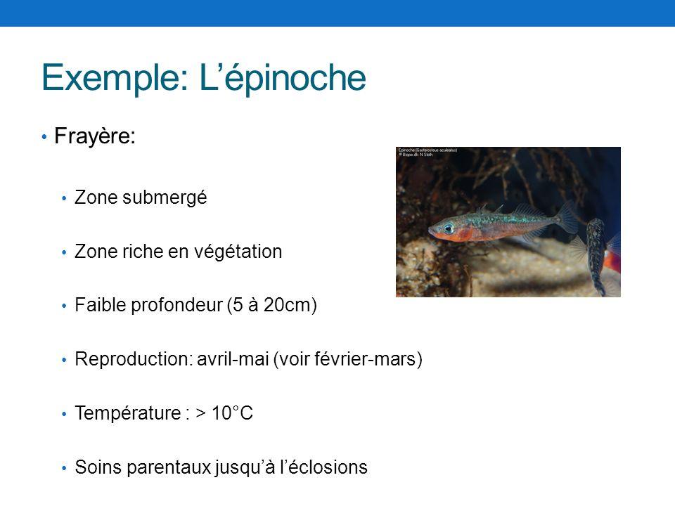 Exemple: Lépinoche Frayère: Zone submergé Zone riche en végétation Faible profondeur (5 à 20cm) Reproduction: avril-mai (voir février-mars) Températur
