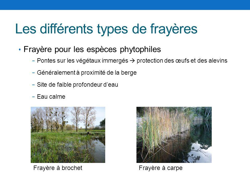 Les différents types de frayères Frayère pour les espèces phytophiles Pontes sur les végétaux immergés protection des œufs et des alevins Généralement