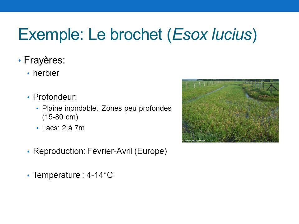 Exemple: Le brochet (Esox lucius) Frayères: herbier Profondeur: Plaine inondable: Zones peu profondes (15-80 cm) Lacs: 2 à 7m Reproduction: Février-Av