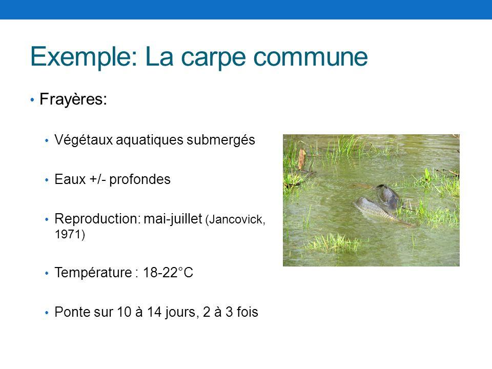 Exemple: La carpe commune Frayères: Végétaux aquatiques submergés Eaux +/- profondes Reproduction: mai-juillet (Jancovick, 1971) Température : 18-22°C