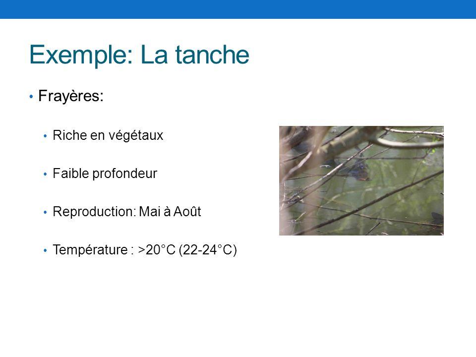 Exemple: La tanche Frayères: Riche en végétaux Faible profondeur Reproduction: Mai à Août Température : >20°C (22-24°C)