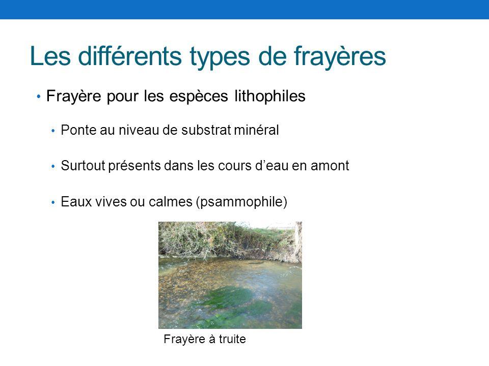 Les différents types de frayères Frayère pour les espèces lithophiles Ponte au niveau de substrat minéral Surtout présents dans les cours deau en amon