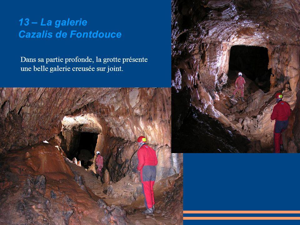 13 – La galerie Cazalis de Fontdouce Dans sa partie profonde, la grotte présente une belle galerie creusée sur joint.