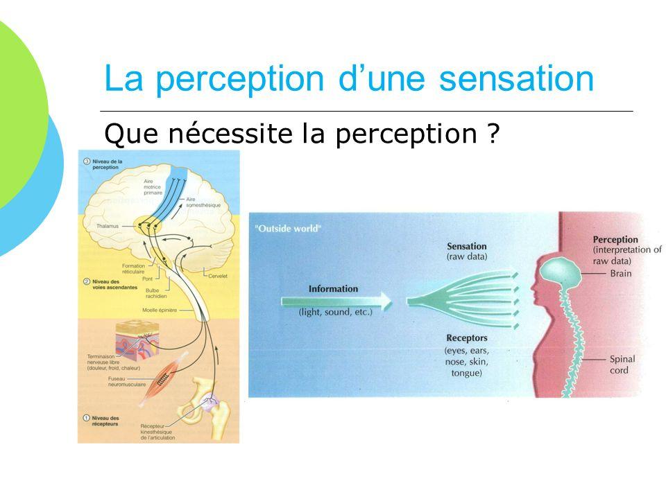 La perception dune sensation Que nécessite la perception ?