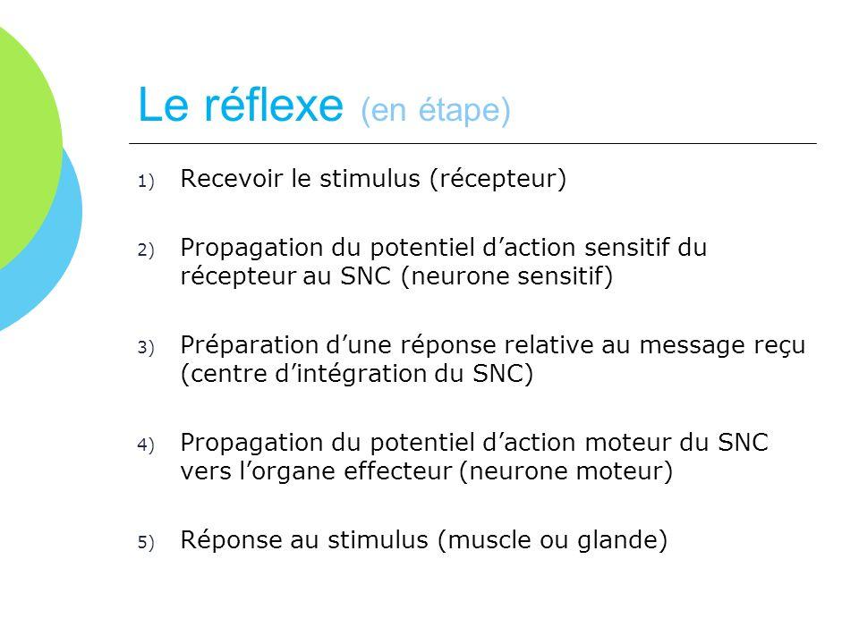 Le réflexe (en étape) 1) Recevoir le stimulus (récepteur) 2) Propagation du potentiel daction sensitif du récepteur au SNC (neurone sensitif) 3) Prépa