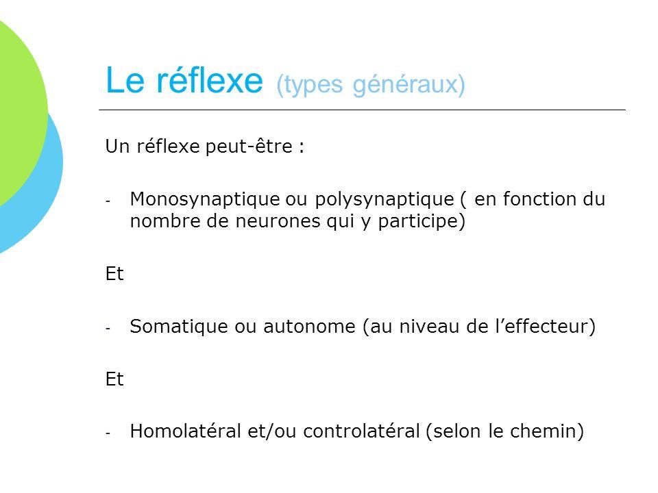 Le réflexe (types généraux) Un réflexe peut-être : - Monosynaptique ou polysynaptique ( en fonction du nombre de neurones qui y participe) Et - Somati