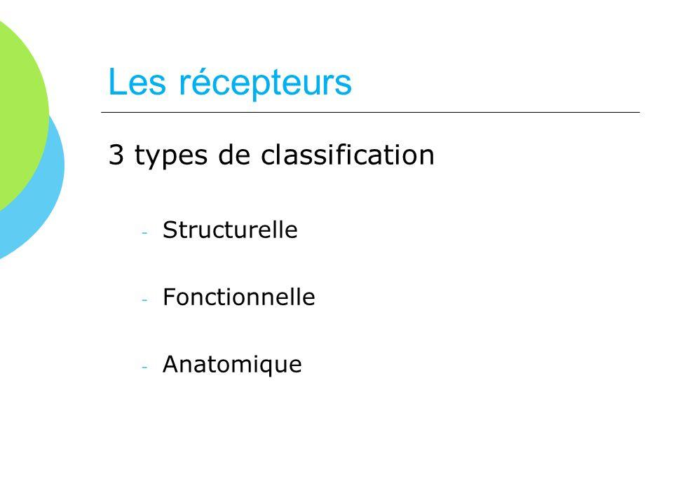 Les récepteurs 3 types de classification - Structurelle - Fonctionnelle - Anatomique