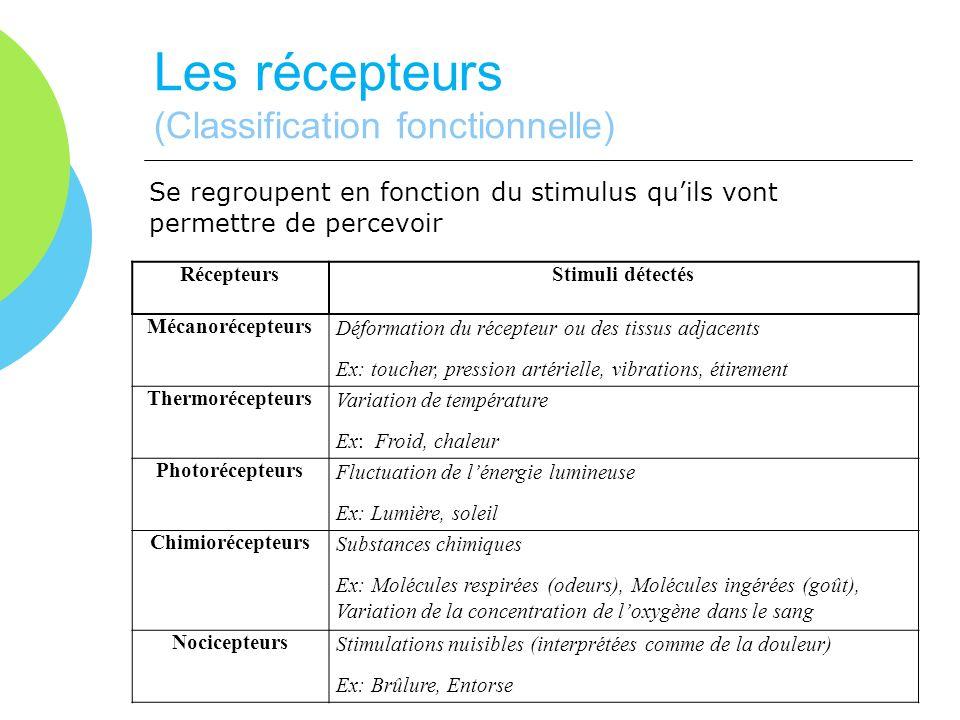 Les récepteurs (Classification fonctionnelle) Se regroupent en fonction du stimulus quils vont permettre de percevoir RécepteursStimuli détectés Mécan