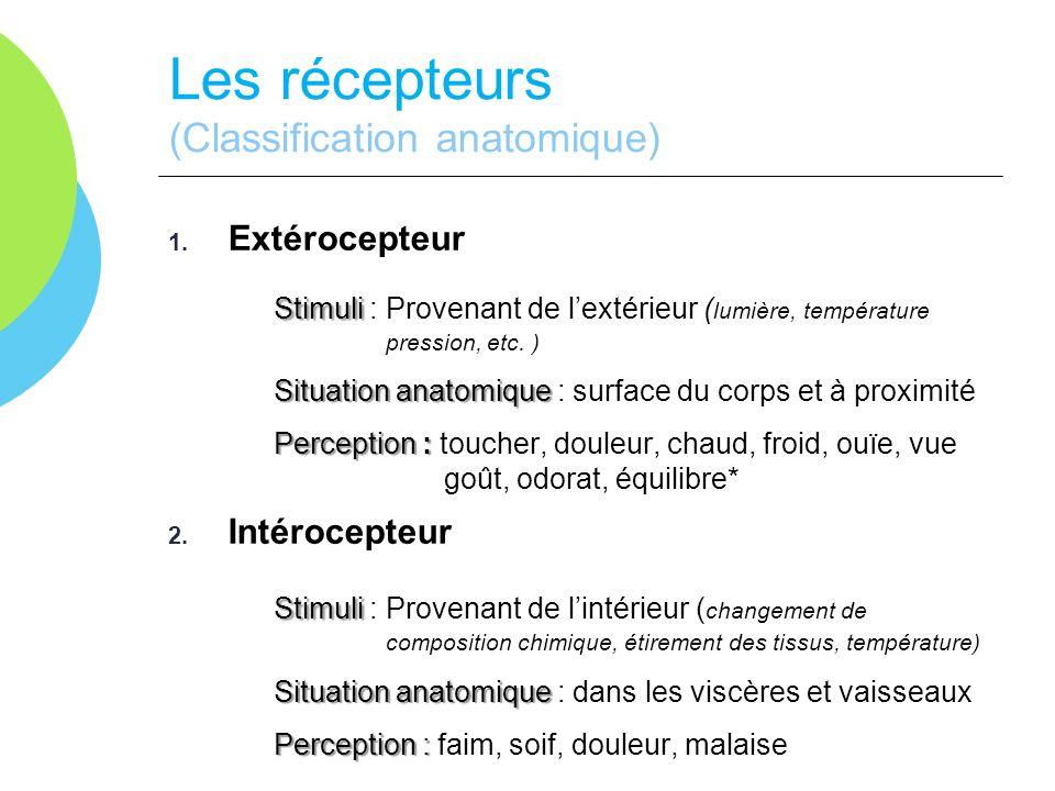 Les récepteurs (Classification anatomique) 1. Extérocepteur Stimuli Stimuli : Provenant de lextérieur ( lumière, température pression, etc. ) Situatio