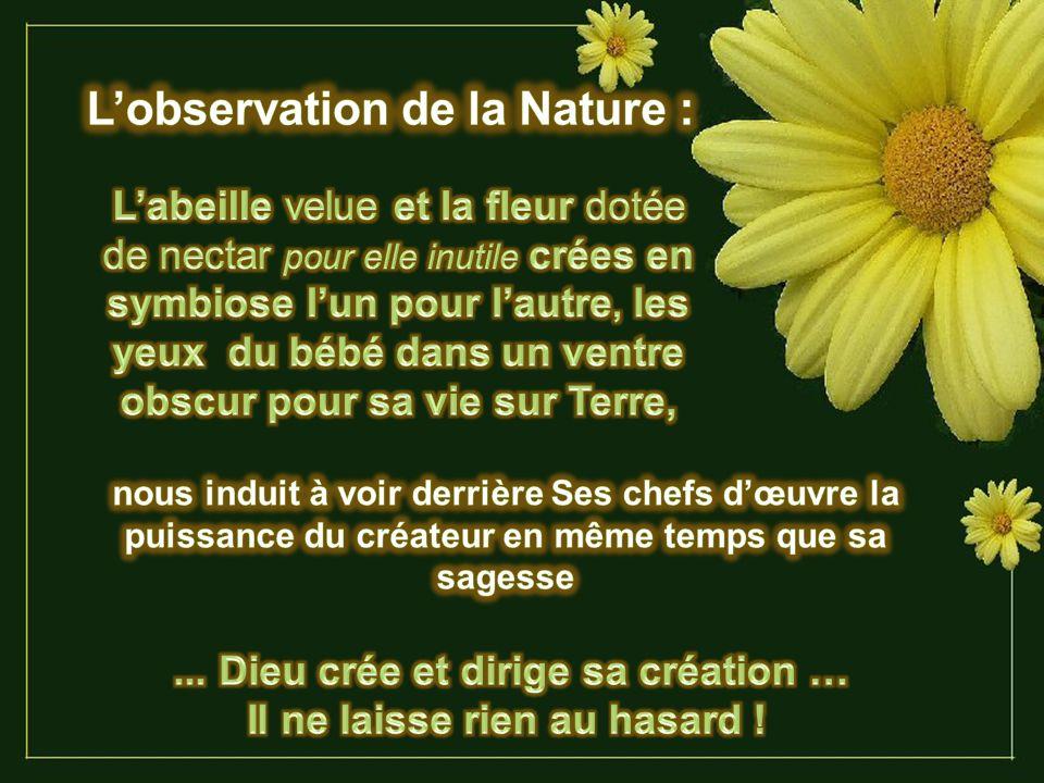 Sans fleurs, les abeilles ne peuvent pas survivre (elles ont besoin de nectar et de pollen) et sans abeille et autres insectes pollinisateurs, les fle