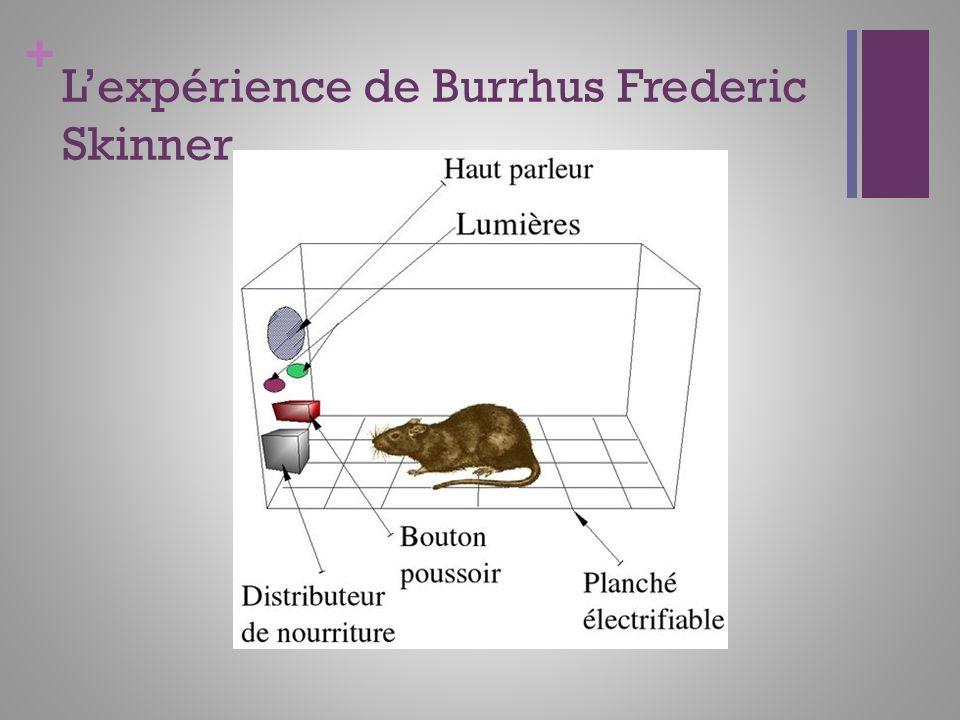 + Lexpérience de Burrhus Frederic Skinner