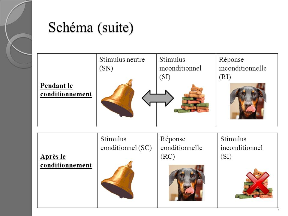 Schéma (suite) Pendant le conditionnement Stimulus neutre (SN) Stimulus inconditionnel (SI) Réponse inconditionnelle (RI) 7 Après le conditionnement S