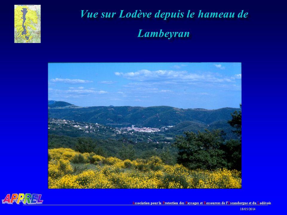 Association pour la Protection des Paysages et Ressources de l Escandorgue et du Lodévois 18/05/2014 18/05/2014 Vue sur Lodève depuis le hameau de Lambeyran