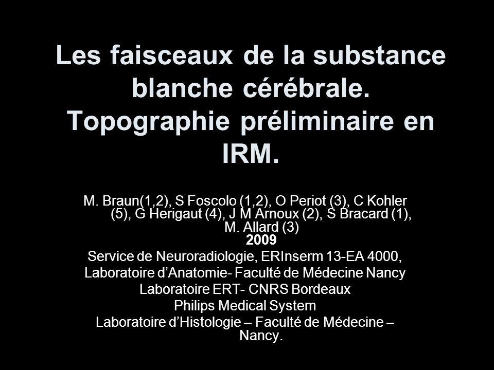 Substance Blanche FAISCEAUX DE PROJECTION FAISCEAUX COMMISSURAUX FAISCEAUX DASSOCIATION