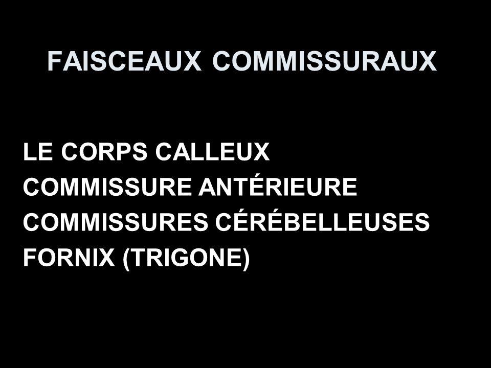 FAISCEAUX COMMISSURAUX LE CORPS CALLEUX COMMISSURE ANTÉRIEURE COMMISSURES CÉRÉBELLEUSES FORNIX (TRIGONE)