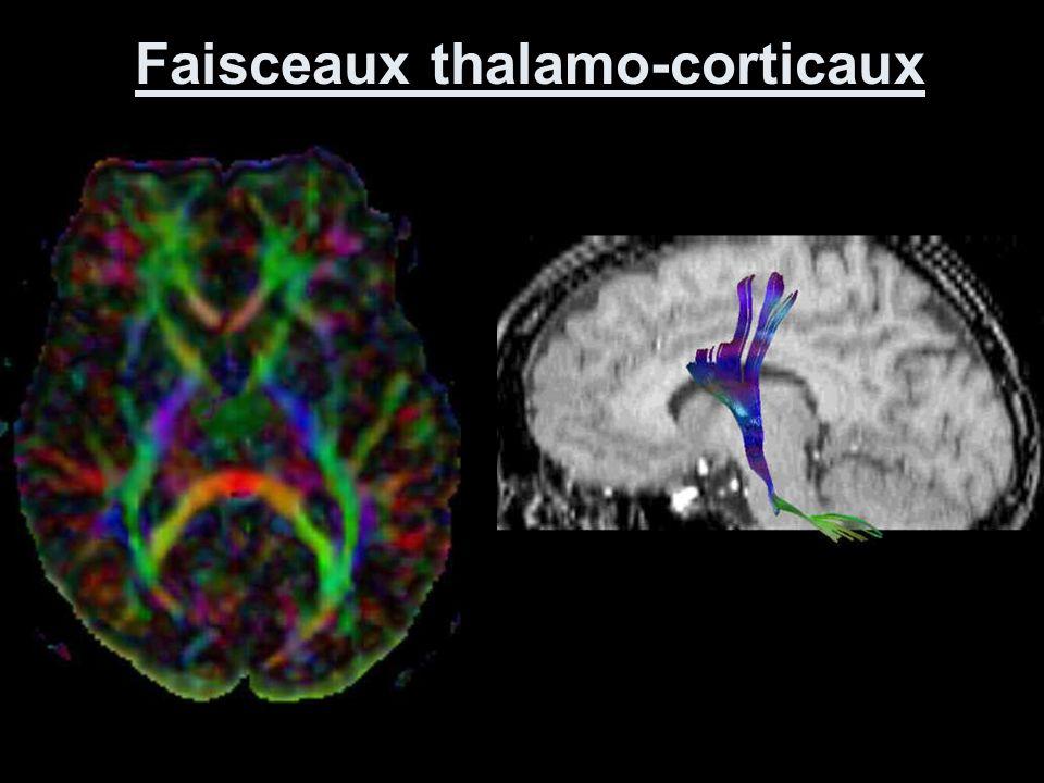 Faisceaux thalamo-corticaux