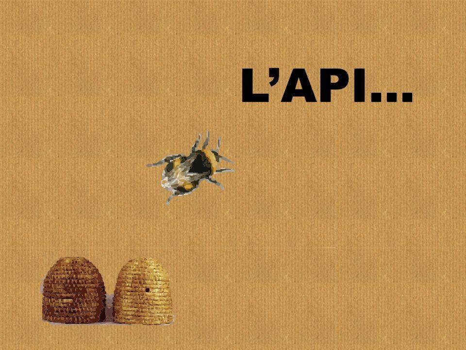 LAPI…