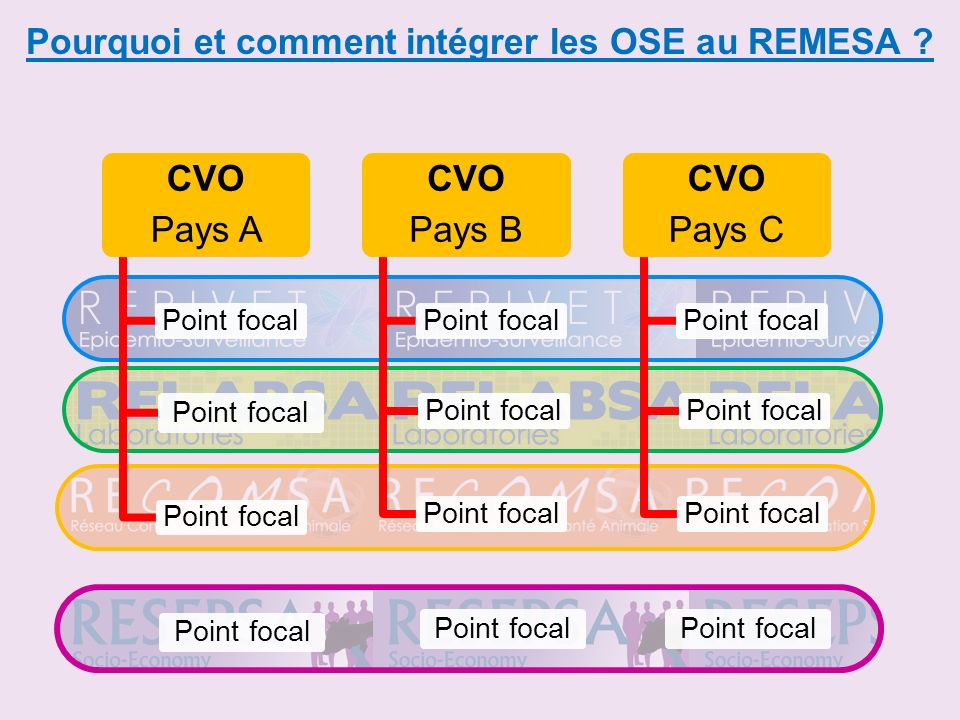 Pourquoi et comment intégrer les OSE au REMESA ? CVO Pays A Point focal CVO Pays B Point focal CVO Pays C Point focal