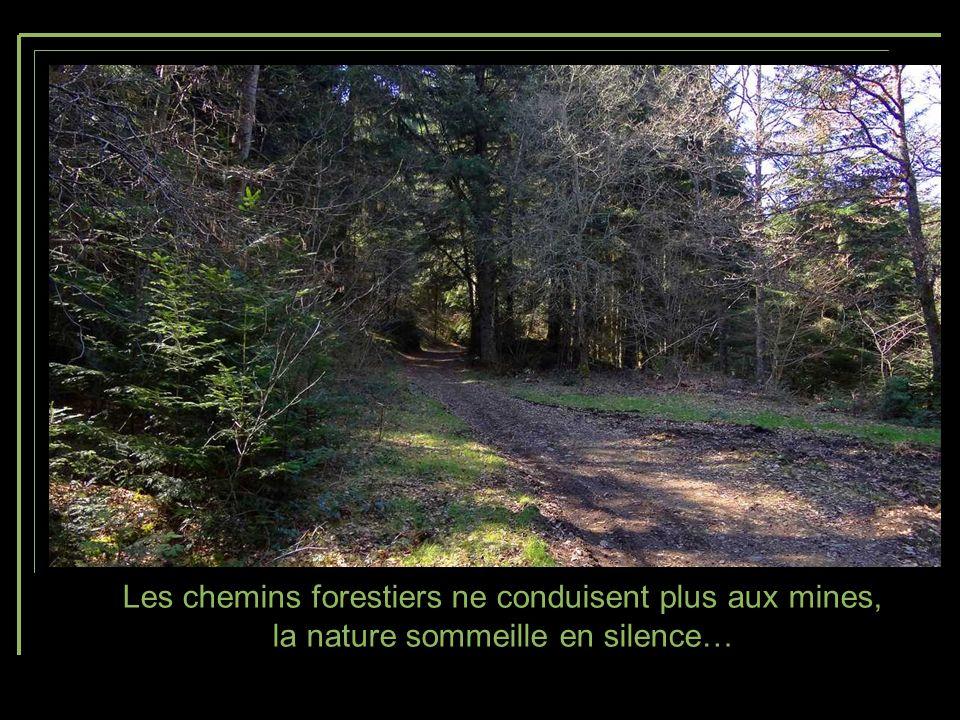 La Chaîne des Puys veille sur ces terres autrefois minières et maintenant consacrées principalement à lélevage.