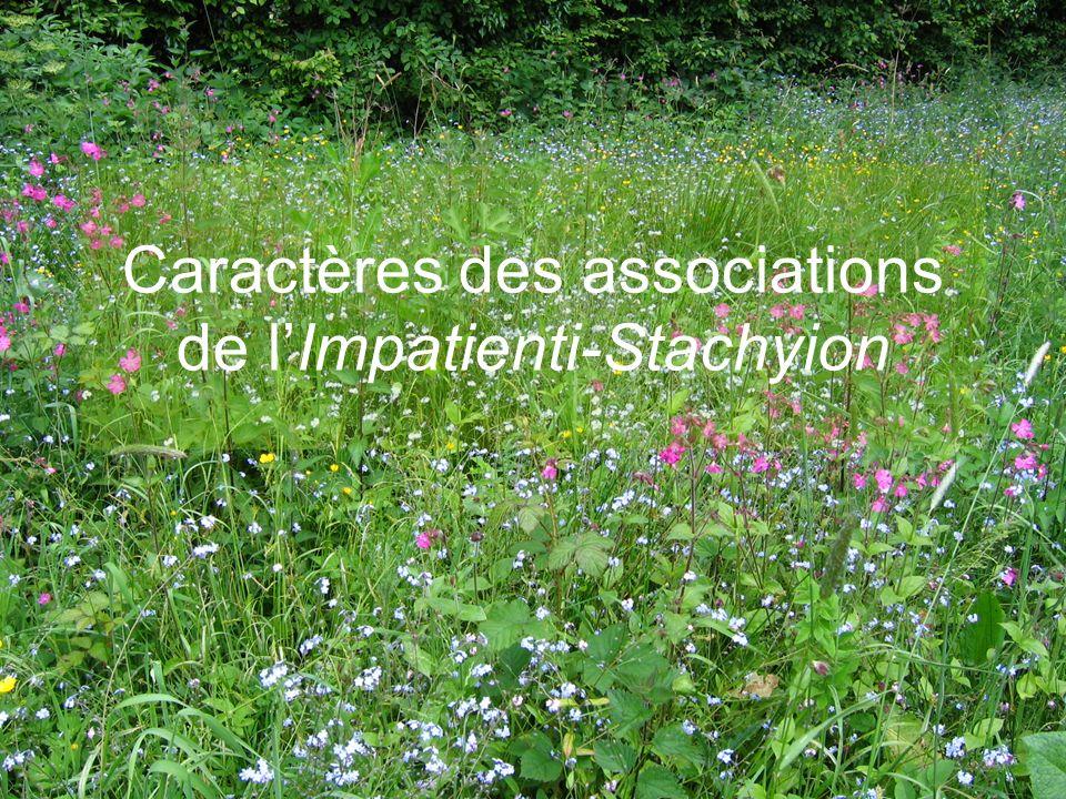 E.CATTEAU (CBNBL), 3/10/10 Caractères des associations de lImpatienti-Stachyion