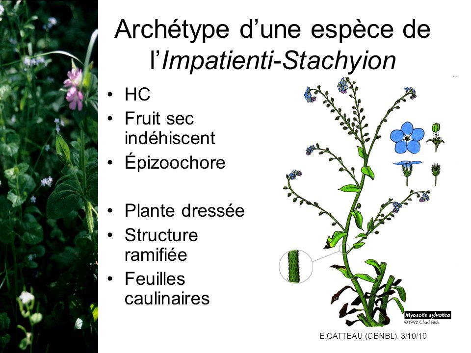 E.CATTEAU (CBNBL), 3/10/10 Archétype dune espèce de lImpatienti-Stachyion HC Fruit sec indéhiscent Épizoochore Plante dressée Structure ramifiée Feuil