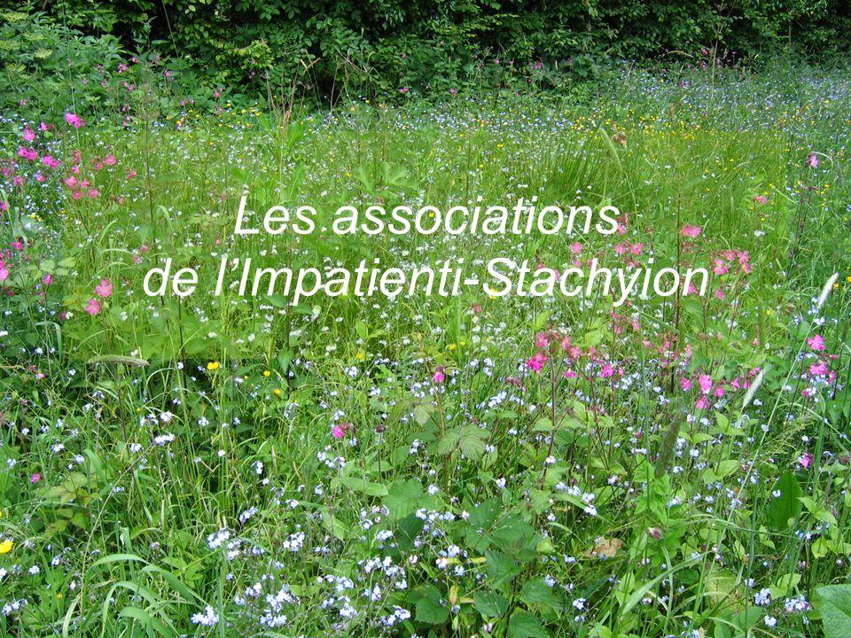 E.CATTEAU (CBNBL), 3/10/10 Les associations de lImpatienti-Stachyion