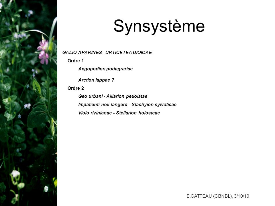 E.CATTEAU (CBNBL), 3/10/10 Synsystème GALIO APARINES - URTICETEA DIOICAE Ordre 1 Aegopodion podagrariae Arction lappae ? Ordre 2 Geo urbani - Alliario