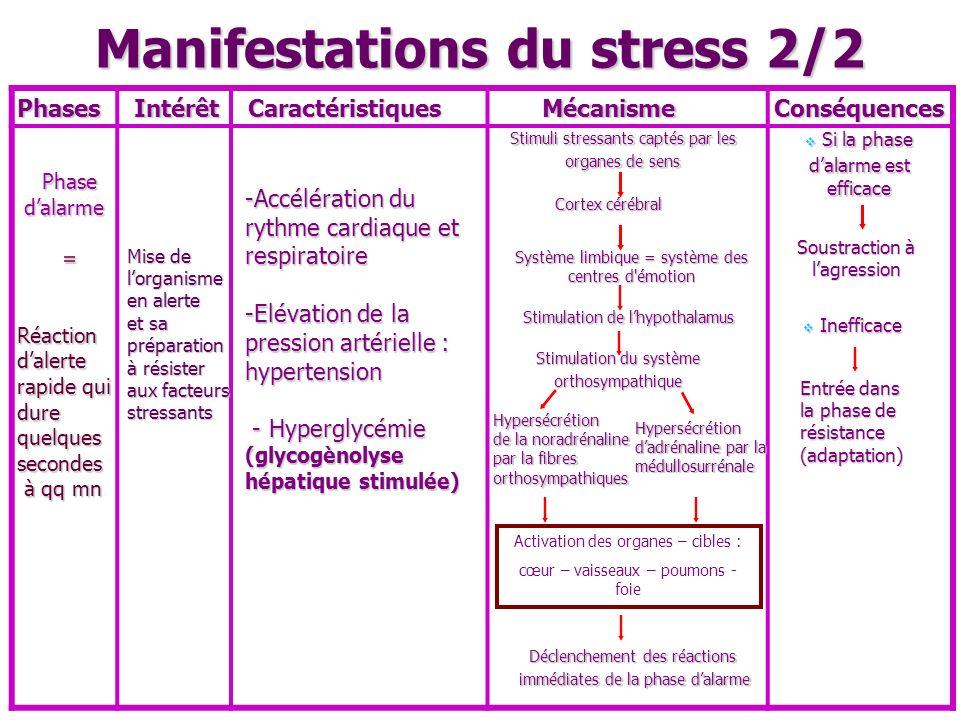 Manifestations du stress 2/2 Activation des organes – cibles : cœur – vaisseaux – poumons - foie Cortex cérébral PhasesIntérêtCaractéristiquesMécanism