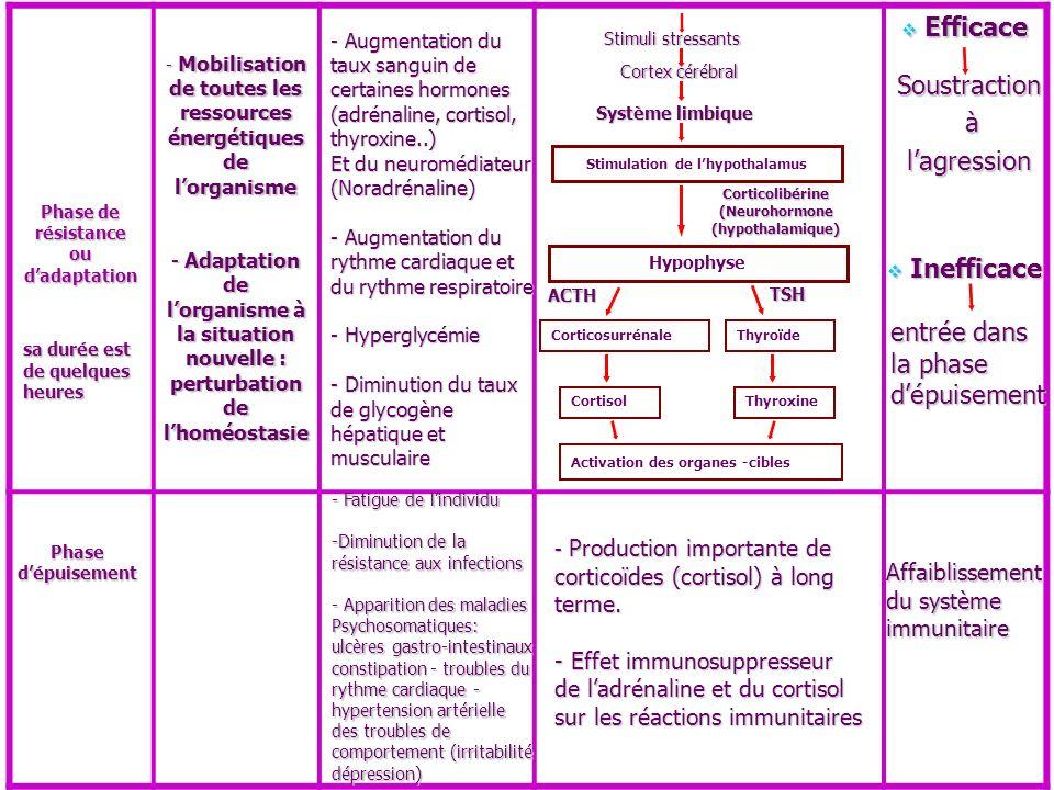 Stimulation de lhypothalamus Hypophyse CorticosurrénaleThyroïde Activation des organes -cibles Phase de résistance ou dadaptation sa durée est de quel