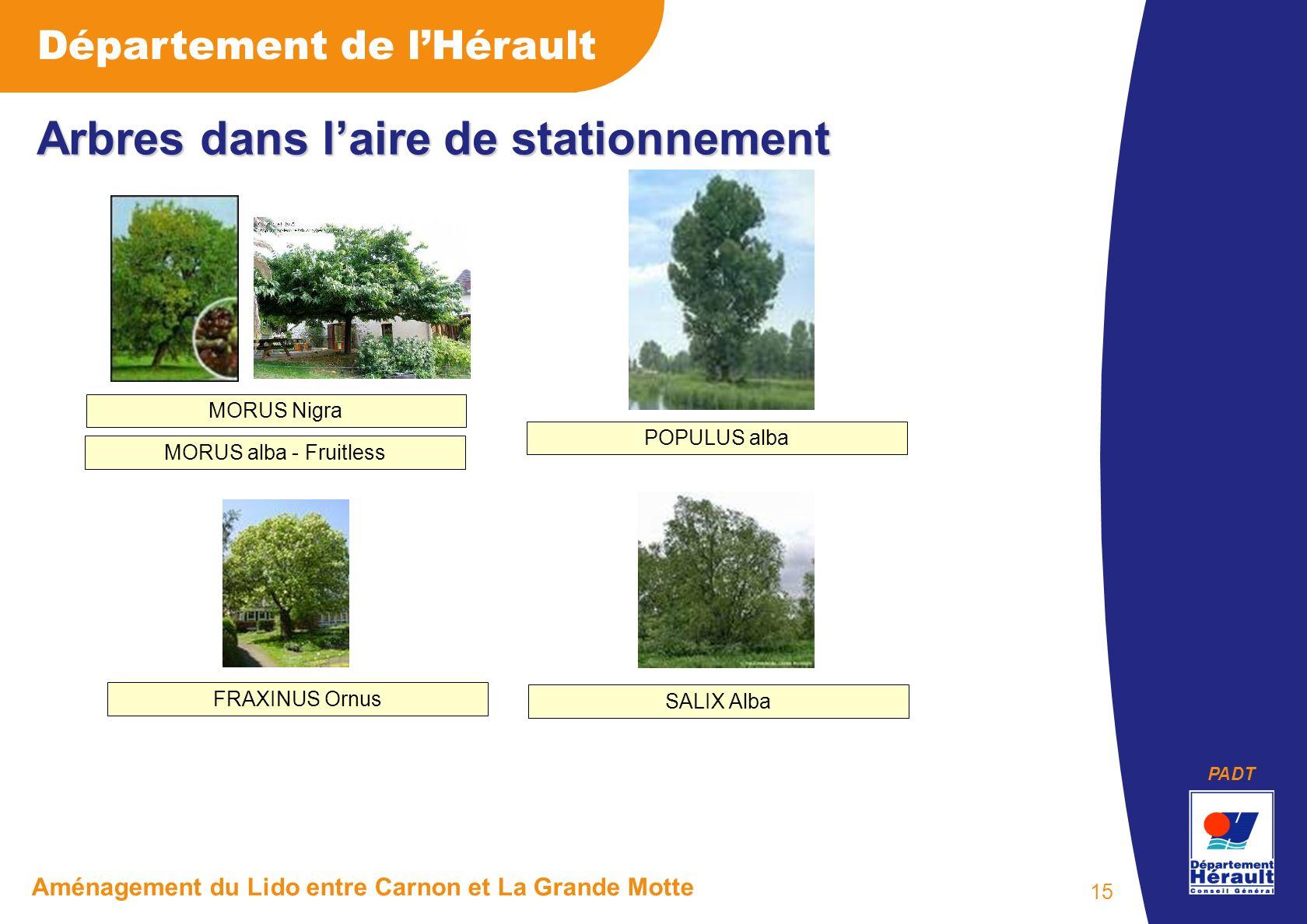 PADT Département de lHérault Aménagement du Lido entre Carnon et La Grande Motte 15 Arbres dans laire de stationnement FRAXINUS Ornus MORUS Nigra POPU