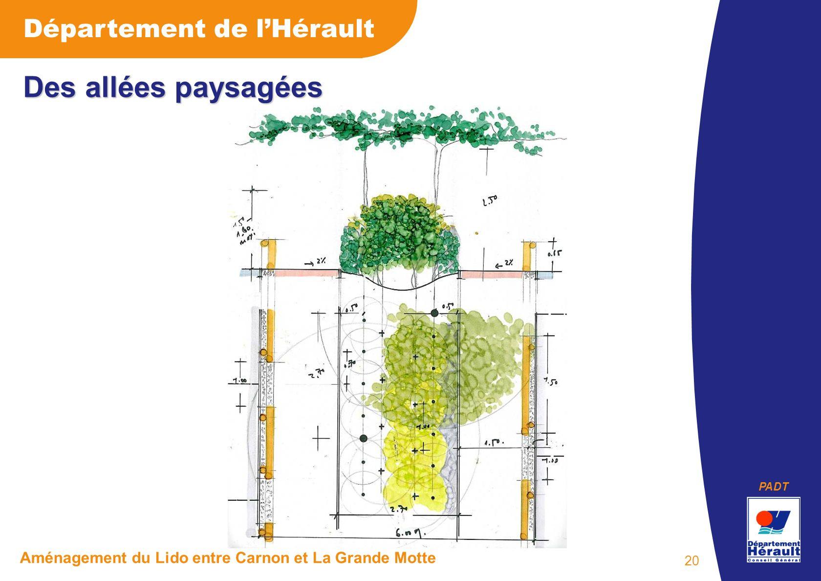 PADT Département de lHérault Aménagement du Lido entre Carnon et La Grande Motte 20 Des allées paysagées