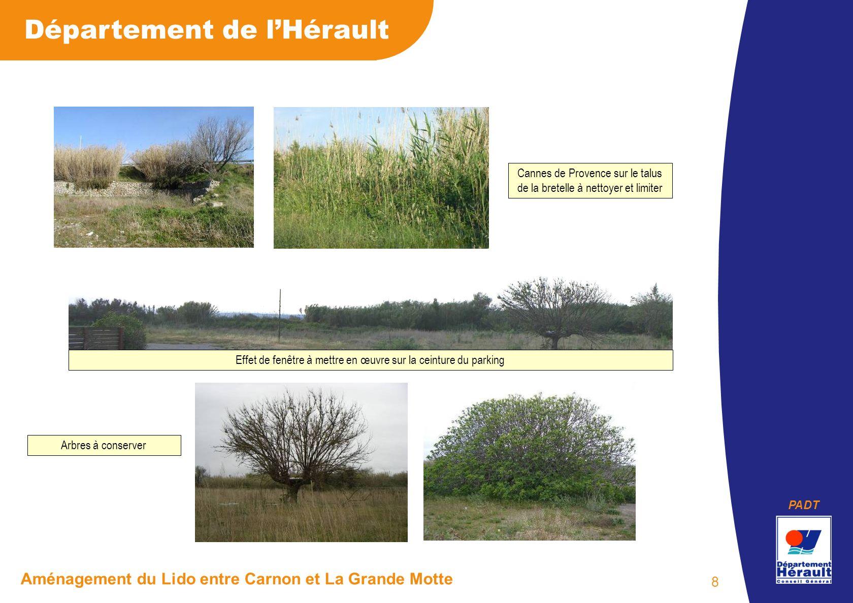 PADT Département de lHérault Aménagement du Lido entre Carnon et La Grande Motte 8 Cannes de Provence sur le talus de la bretelle à nettoyer et limite