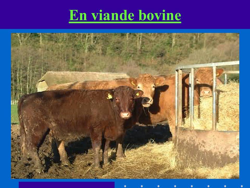 En viande bovine