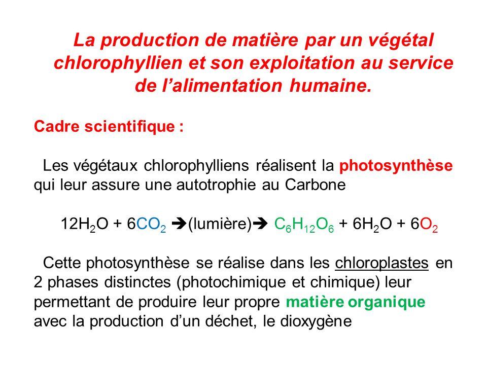 La production de matière par un végétal chlorophyllien et son exploitation au service de lalimentation humaine.