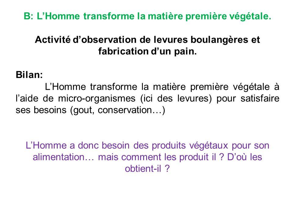 B: LHomme transforme la matière première végétale.