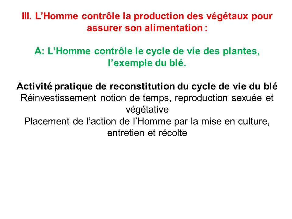 III. LHomme contrôle la production des végétaux pour assurer son alimentation : A: LHomme contrôle le cycle de vie des plantes, lexemple du blé. Activ