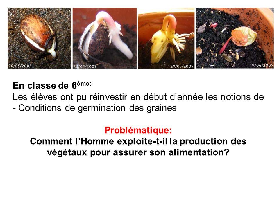 En classe de 6 ème: Les élèves ont pu réinvestir en début dannée les notions de - Conditions de germination des graines Problématique: Comment lHomme exploite-t-il la production des végétaux pour assurer son alimentation?