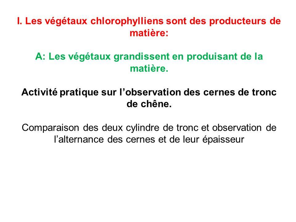 I. Les végétaux chlorophylliens sont des producteurs de matière: A: Les végétaux grandissent en produisant de la matière. Activité pratique sur lobser