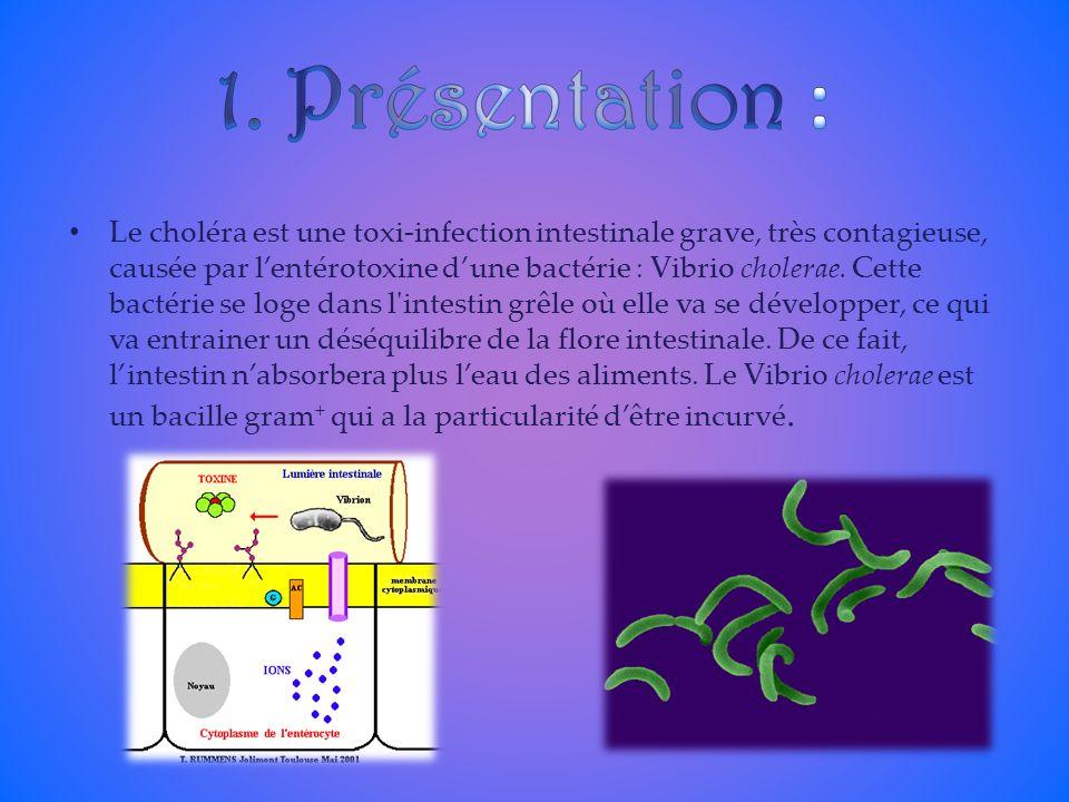 Le choléra est une toxi-infection intestinale grave, très contagieuse, causée par lentérotoxine dune bactérie : Vibrio cholerae. Cette bactérie se log