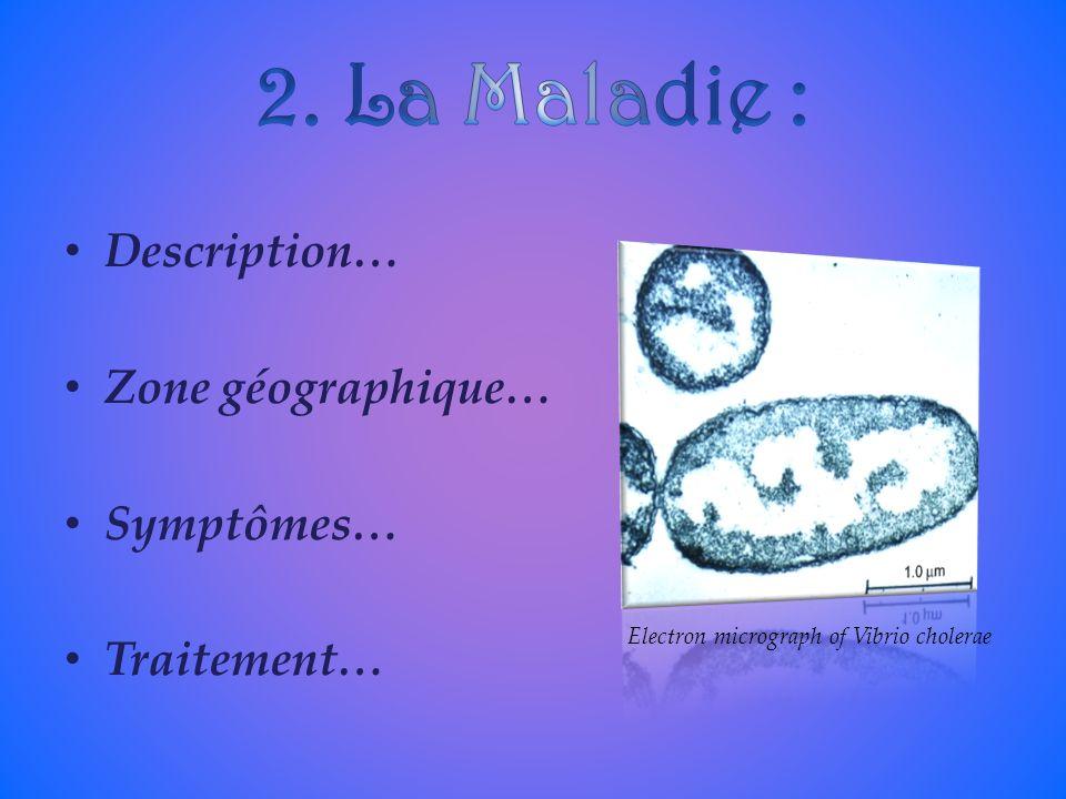 Description… Zone géographique… Symptômes… Traitement… Electron micrograph of Vibrio cholerae