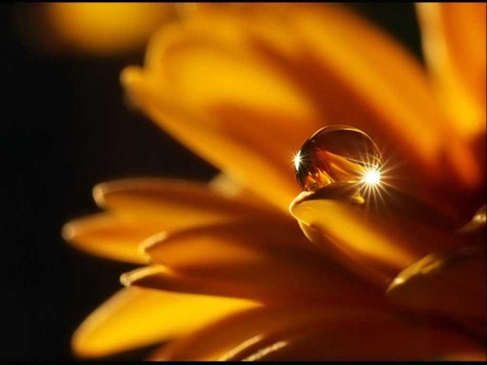 Telle une forteresse au gré des événements heureux… Une nouvelle sagesse se construira graduellement… Pour connaître vraiment ces effets lumineux… Acceptez de vivre dans votre paysage intérieur… Vous discernerez de votre doute… la vérité de cette profondeur… Ancrés depuis tant dannées… vous effacerez tous vos tourments…