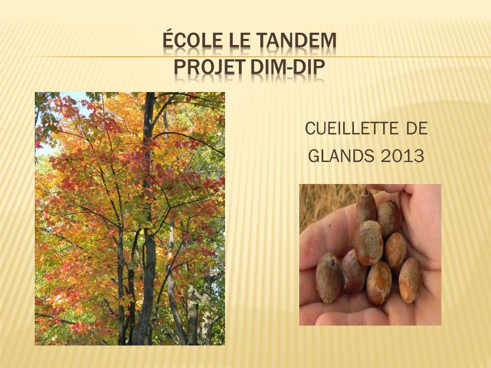 CUEILLETTE DE GLANDS 2013